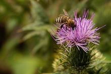 Un studiu britanic confirmă că insectele sunt mai hrănitoare decât carnea de vită și pui
