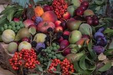 LEACURI DIN GRĂDINĂ: Prunele