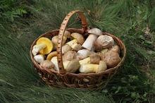 LEACURI DIN GRĂDINĂ: Ciupercile