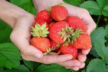 DULCEGĂRII Prahova: Spuma de căpșuni, un desert răcoritor pentru zilele fierbinți de vară