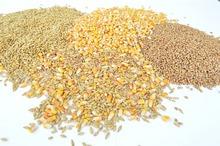 Pulberea din vlăstari de orz – pudra minune, cu peste 68 micronutrienţi activi, 17 enzime şi 8 tipuri de aminoacizi