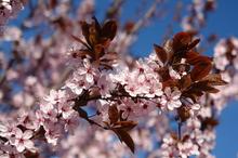 Duminica Floriilor – obiceiuri, superstiţii şi tradiţii culinare